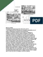 Ajuste valvulas RENAULD LOGAN.pdf