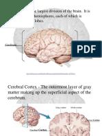 #Human_brain.ppt