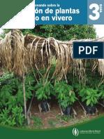 Produccion de plantulas de cacao en vivero