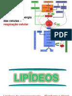 aula-5---oxidacao-acidos-graxos-e-glioxilato-2017