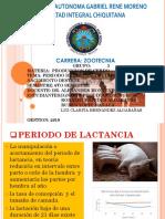 PERIODO DE LACTANCIA