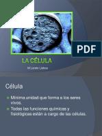1 Celula-membrana Plasmática