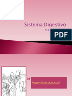4 Sistema Digestivo 1