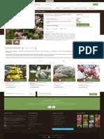 Magnolia 'George Henry Kern' - GardenExpert.ro