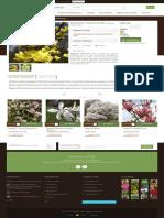 Magnolia 'Yellow River' - GardenExpert.ro