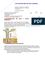 Nutrición y reproducción vegetal (castellano imprimir).doc