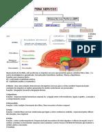 Resumão Anatomia