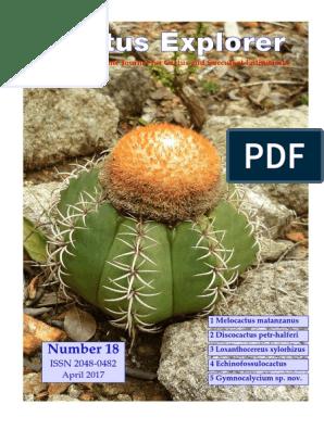 ECHINOCEREUS viridiflorus Hardy Hedgehog Cactus Graines!