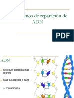 4-Reparacion de ADN