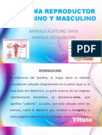 FEMENINO.pptx