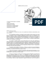 embriología FORMACIÓN DE LA BOCA