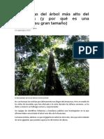 El hallazgo del árbol más alto del Amazonas