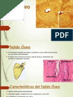 Tejido Oseo Histologia