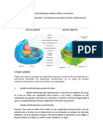 imprimir biologia