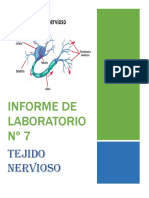lab 7 histo.docx