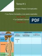 Clase_7_Los_12_Nervios_Craneales_8_31_Nervios_Espinales