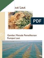 kuliah-8-rumput-laut.pptx