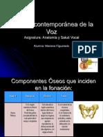 Anatomia y Salud Vocal - Entrega Final