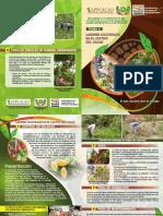 6-Labores-culturales-en-el-cultivo-del-cacao.pdf