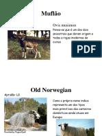 RAÇAS_OVINAS_INTERNACIONAIS.pdf