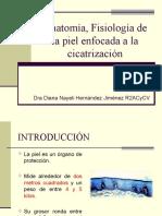anatomiapiel-160227060213