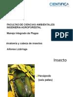 Clase 02 (anatomia y cabeza de insectos).pdf