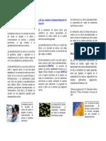 Brochure Informativo.pdf