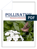 Pollination.docx