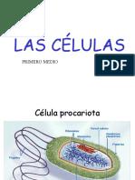 Celulas_organelos-ppt.ppt