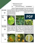 6767.6784. EXERCICIO CITRUS - BACTERIOSES (DESC.FIG).pdf