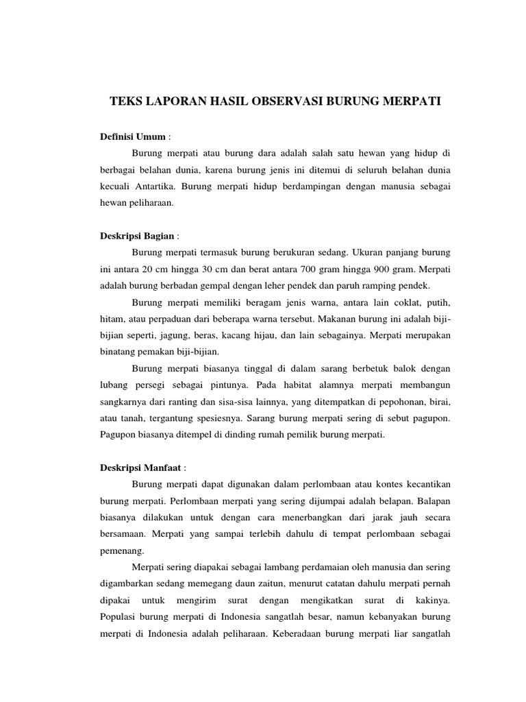 Teks Hasil Observasi Burung Merpati