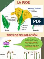 TIPOS DE FRUTOS CARNOSOS