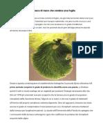Lumaca fotosintetizzante