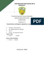 ostua dendro 02.docx
