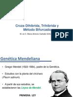 3 CruzDihíbrida-Trihíbrida-MBifurcado