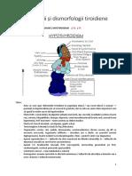 Endocrinologie C4