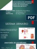 FISIOLOGÍA SISTEMA URINARIO (1).pptx