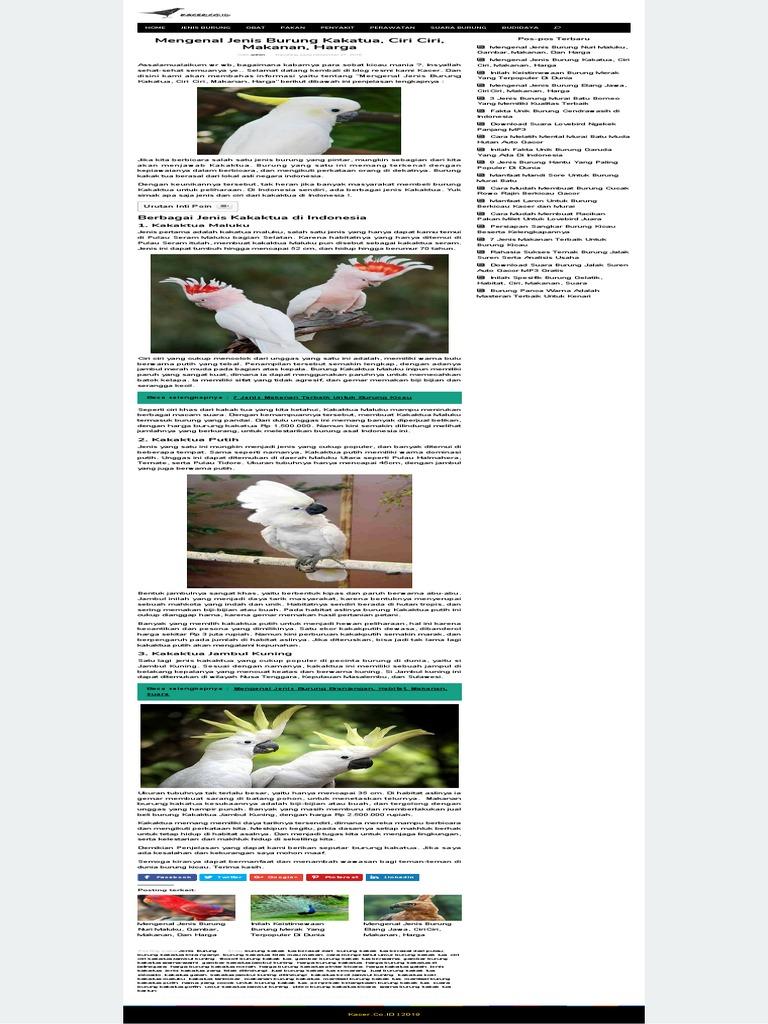 Mengenal Jenis Burung Kakatua Ciri Ciri Makanan Harga