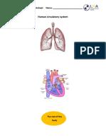 Circulatory system worksheet.docx