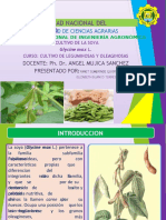 DIAPOSITIVAS DE Cultivo de Soya (Glycine max L.).pptx