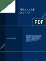 Peisajul_de_savana