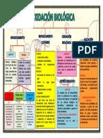 OXIDACION BIOLOGICA.docx