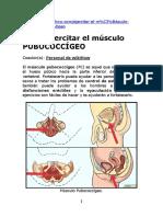 Musculo Pubococcigeo