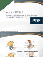 Semana 5 - Region Glutea, Region Muslo y Rodilla