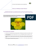 Capim Santo - Meditação da flor Mimulus