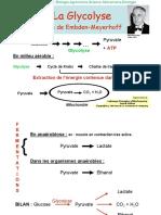 Biochimie microbienne_3.Glycolyse