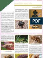 Los_Anfibios_y_reptiles_del_Santuario_Hi.pdf