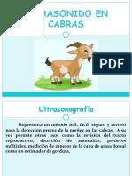 ULTRASONIDO EN CABRAS