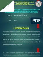 TESIS (RESPUESTA BIOLOGICA DE POLLOS PARRILLEROS ALIMENTADOS CON ZEOLITA NATURAL