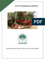1107185406Model_Bankable_Scheme_Pomegranate___Rajasathan.pdf